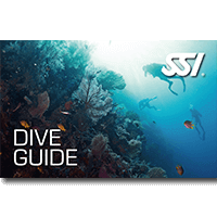 Dive Guide.png