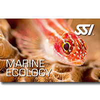 Marine Ecology.png